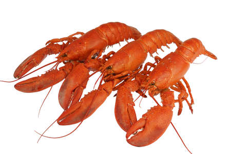 cooked red lobster isolated on white background