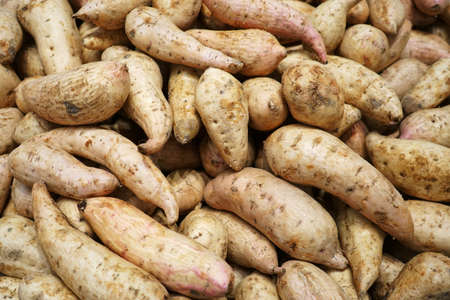 fresh sweet potato in pile as food background 免版税图像 - 159501870