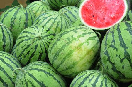 pile of fresh watermelon in the harvest season 免版税图像