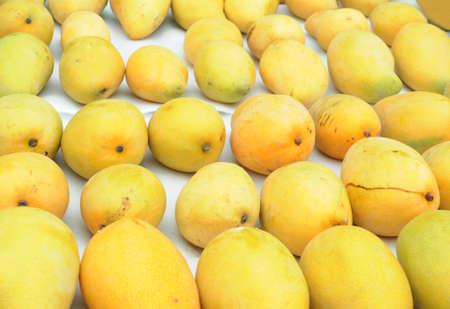 fresh mango in pile in the harvest season