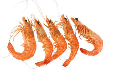 fresh cooked shrimp isolated on white background