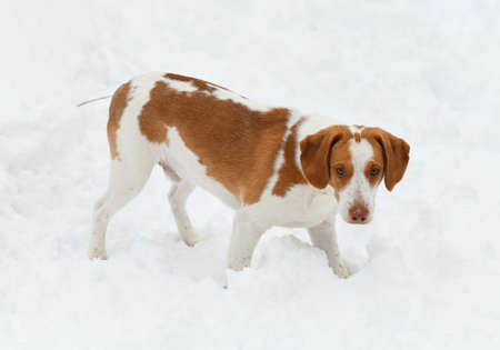 close up on dog in the winter snow