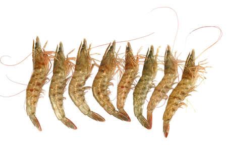 Fresh living shrimp isolated on white background 免版税图像