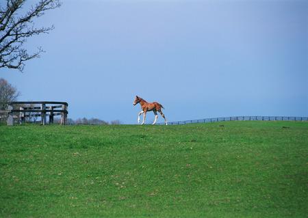 Child horse