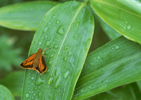 Butterfly and bamboo grass