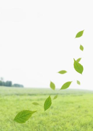 Glassland and leaves LANG_EVOIMAGES