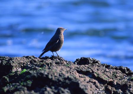 Bird LANG_EVOIMAGES