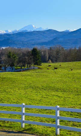 Winter season on cattle farm in a valley. View on a valley with mountains on blue sky background