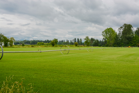 English lawn growing on a farm. Green lawn with irrigation system over the field on cloudy summer day Stock Photo