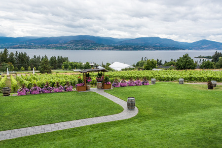 Wedding ceremony place on the vineyard with panoramic view on Okanagan lake and mountains. Kelowna, British Columbia