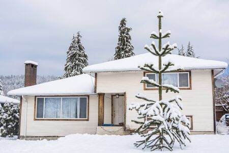 Family house with monkey tree on the front yard in snow. Residential house on winter cloudy day Stockfoto