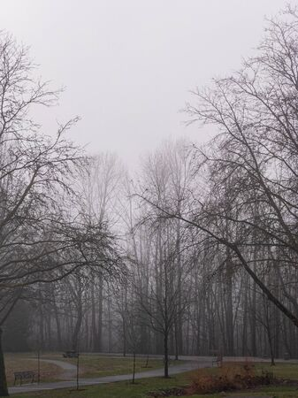 Cold foggy day in a park on winter season