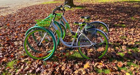 Green bycicles in recreational park on autumn season