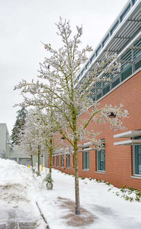 Ice covered trees and office building on overcast sky background