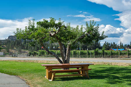 Picnic table at orchard farm under the apple tree