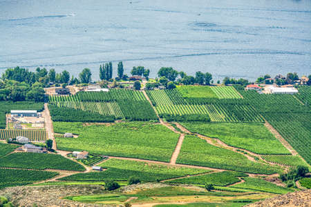 Landscape overview with farmers land at Okanagan lake on summer day 版權商用圖片