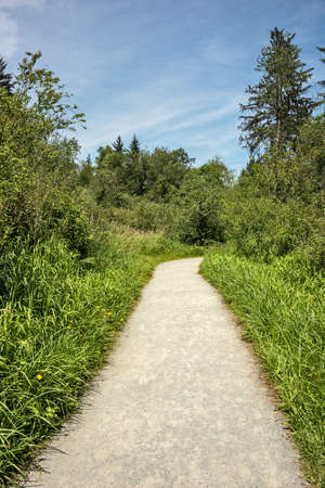 Hiking trail through a forest park on sunny summer day
