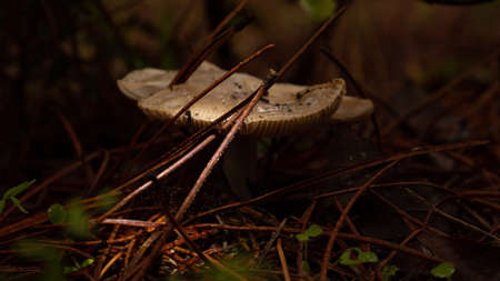 Pine branch pole on mushroom in the backlit forest
