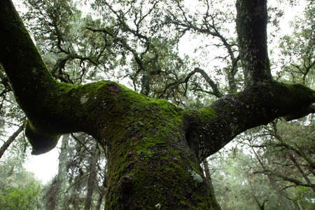 Tree trunk seen from below in the forest in backlight