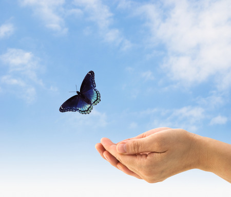 Hands releasing a butterfly on a blue sky. Stock Photo