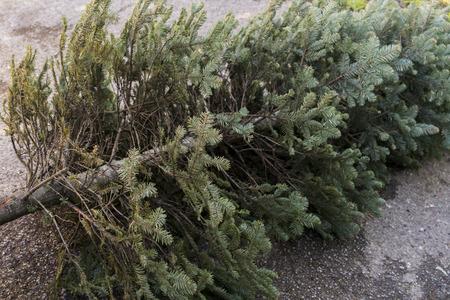 Fin de la Navidad. Viejo árbol de navidad descarta. Foto de archivo - 69268437