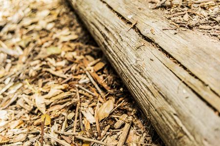 bark mulch: Wood Log on mulch with copy space