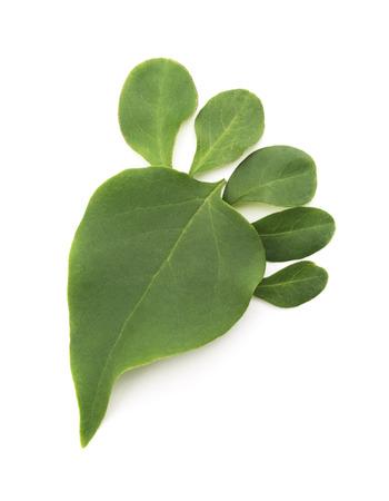 Green Leaf Foot — Carbon Footprint