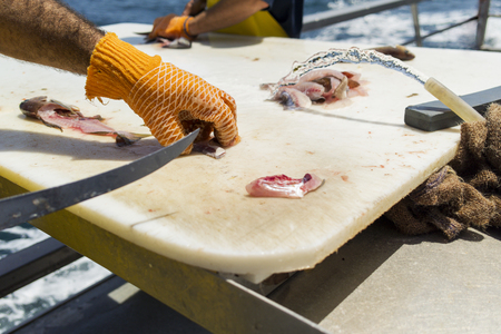 A fisherman wearing gloves cutting fish fillets on cutting board Banco de Imagens