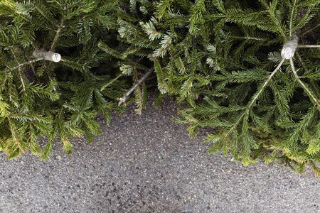 Old Christmas Trees Thrown Away.