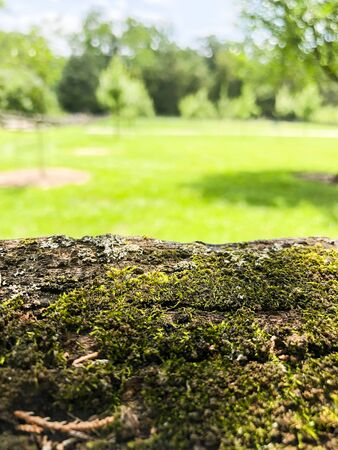 Sunny Green Outdoor Park With Tree Stump