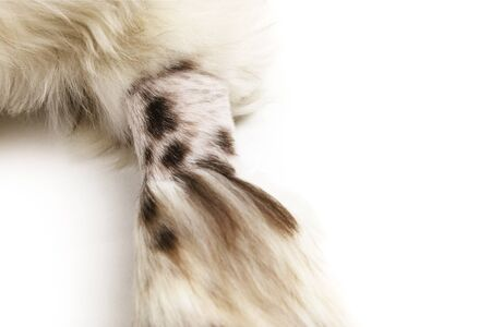 Prepped Shaved Dog Paw Arm Foto de archivo - 136964947