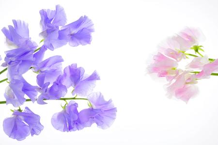 甘いエンドウ豆の花