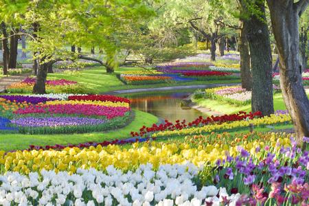 東京都の昭和記念公園で色とりどりのチューリップ。 写真素材 - 92881733