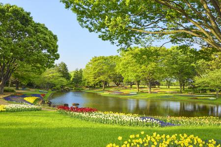 春の東京・昭和記念公園にチューリップが咲く新緑の公園。 写真素材