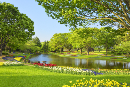 A park of fresh green with tulips blooming at Showa Memorial Park, Tokyo, Japan in spring.