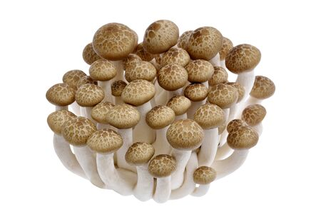 Bunashimeji mushroom isolated on white background
