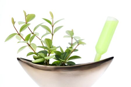 Plant Activator and foliage plant