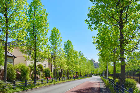 Fresh green city lined with houses