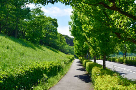 Beautiful fresh green road background