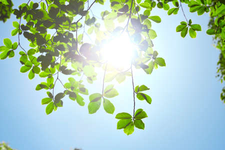 Fresh green and sun background