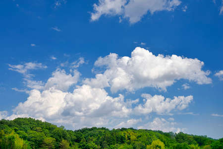 Fresh green trees and blue sky with clouds