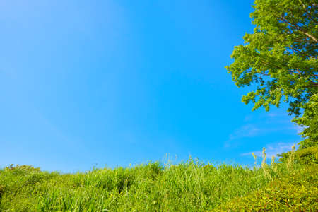 Blue sky and plant background