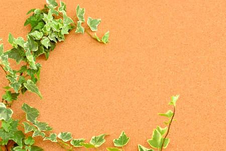 Botanical frame : Ivy on cork board.