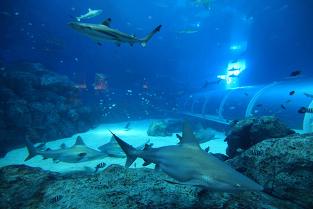 aquarium visit: Aquarium Stock Photo