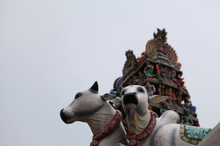 god's cow: Indian temple Stock Photo