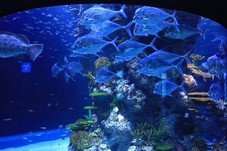 aquarium visit: Underwater World