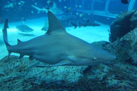 aquarium visit: Underwater World