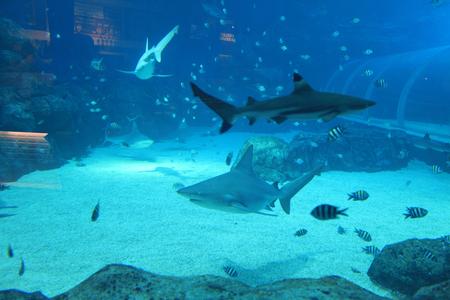 aquarium visit: Underwater Stock Photo