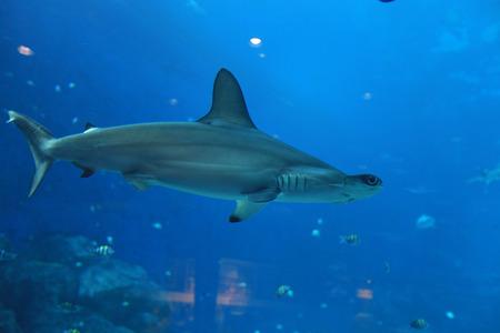 aquarium visit: Shark Stock Photo