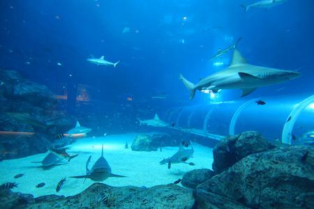 aquarium visit: Sharks